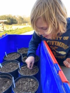 Home Learning – Seed Planting