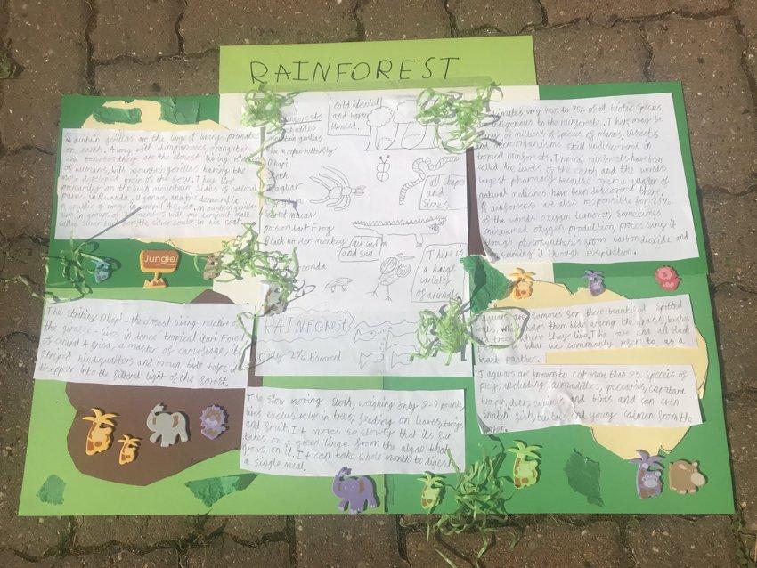 Rainforest Home Learning!