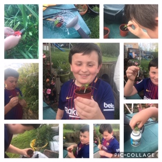 Plant Cuttings – Home Learning
